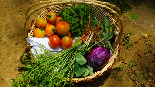 Vegetables foraged from the farm
