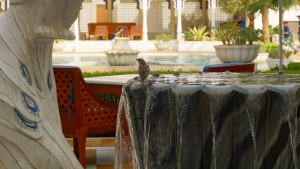 Birdie spotted