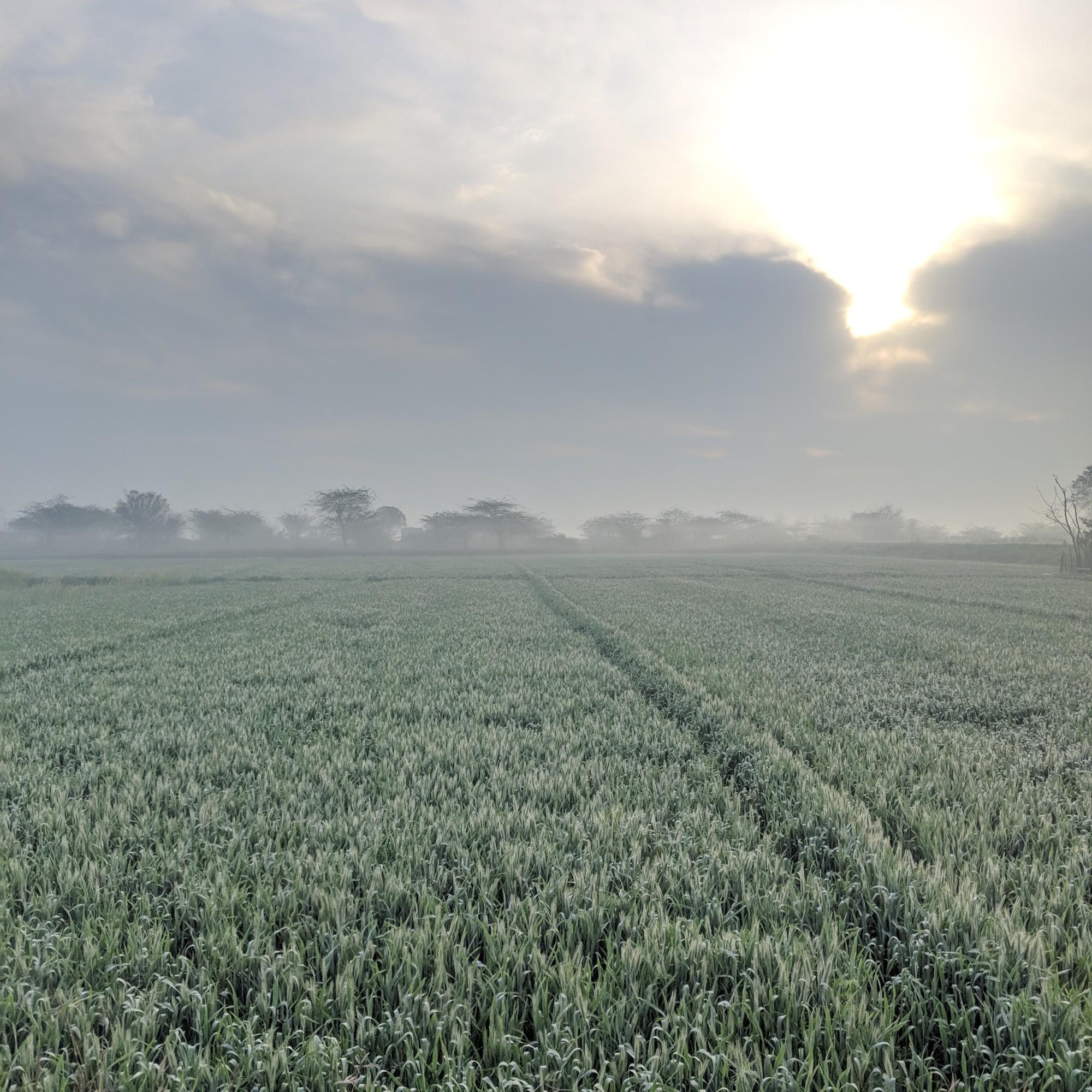 The beautiful farm